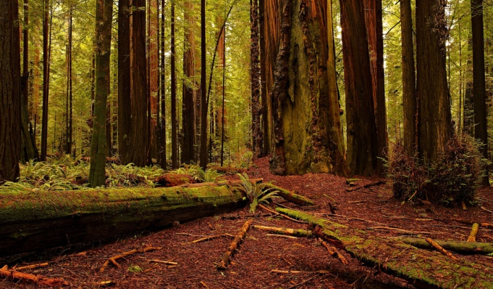 Redwood by Kevin Faber