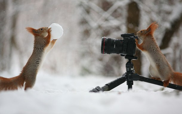 macro-photography-squirrel-vadim-trunov-russia-1