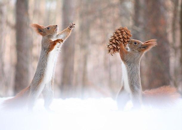 macro-photography-squirrel-vadim-trunov-russia-11