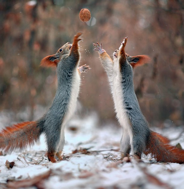 macro-photography-squirrel-vadim-trunov-russia-12