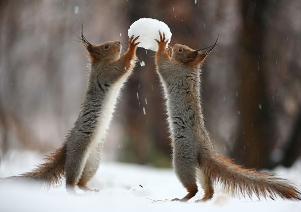 macro-photography-squirrel-vadim-trunov-russia-3