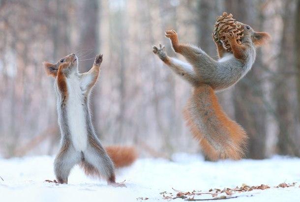 macro-photography-squirrel-vadim-trunov-russia-5