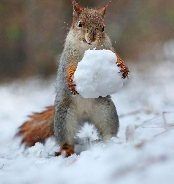 macro-photography-squirrel-vadim-trunov-russia-6