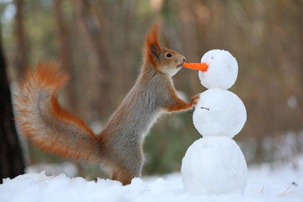macro-photography-squirrel-vadim-trunov-russia-9