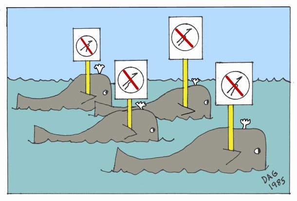 whales no kill
