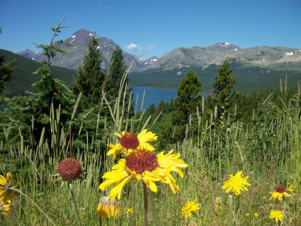 Daffodils, Lake, and Mountain in Glacier